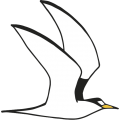 Little_tern_logo